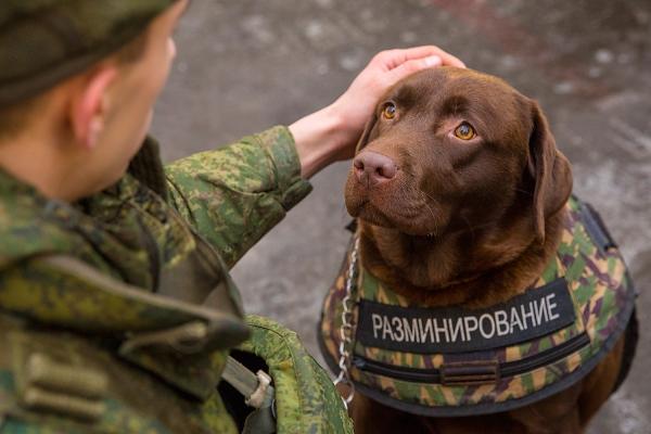 Бронежилет для служебного пса